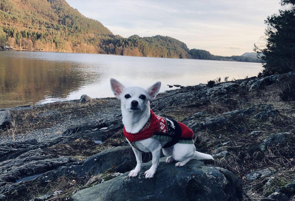 Moya by the lake